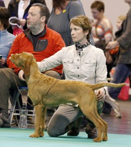 Ostor - Best Puppy in Breed at Crufts 2013. Photo: Sharon Newman
