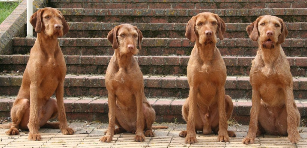 Proud dad Brokk, second right, with three of his progeny from his first litter, pictured in 2008, from left, Steffan, Skarlat and our Lana