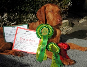 Zoldmali Huncut of Lanokk (Imp Hun) - Best of Breed, Crufts 2014