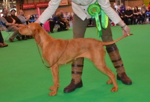 Zoldmali Huncut of Lanokk (Imp Hun) after being awarded Best of Breed at Crufts 2014