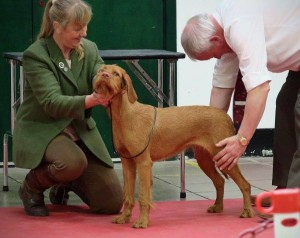 Violet being assessed by the judge. Clever puppy!