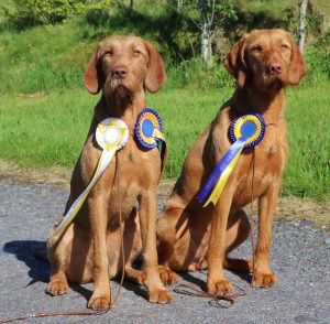 Kefir, left, Best Puppy and PG3, and Csinos, Best of Breed and shortlisted for Best in Show